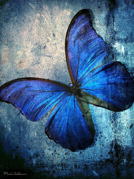 Maculinea alcon, a borboleta azul que Frederick almejava possuir em sua coleção. Fonte: http://zip.net/bxtF6s